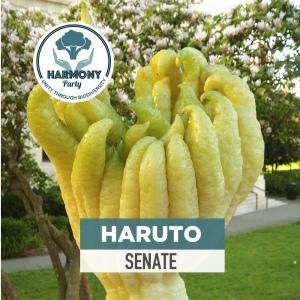 Harmony Haruto